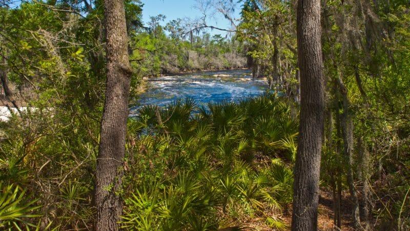 Florida Trail view of Big Shoals