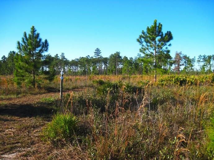 Longleaf Flatwoods Reserve