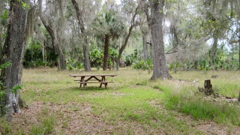 Prairie Creek Preserve picnic spot