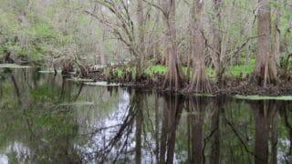 Prairie Creek Preserve