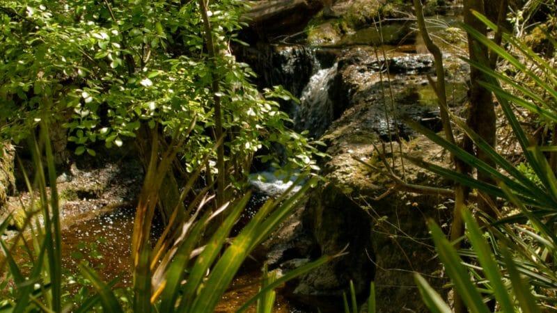 Robinson Branch Falls