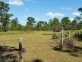 Hiking Charles Bronson State Forest (Joshua Creek Trailhead)