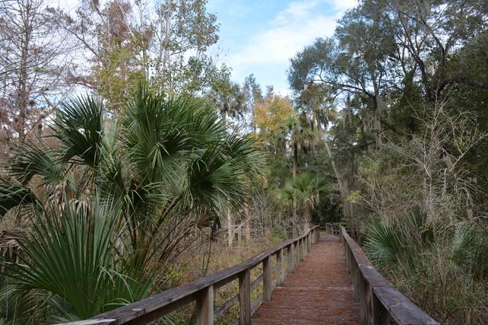Haw Creek Preserve