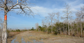 I dared a slippery mile of Big Cypress to meet the thru-hikers, but I had to walk very carefully