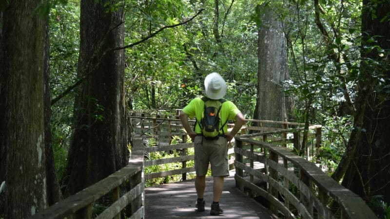On the Corkscrew Swamp Boardwalk