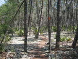 Florida Trail, Eaton Creek North