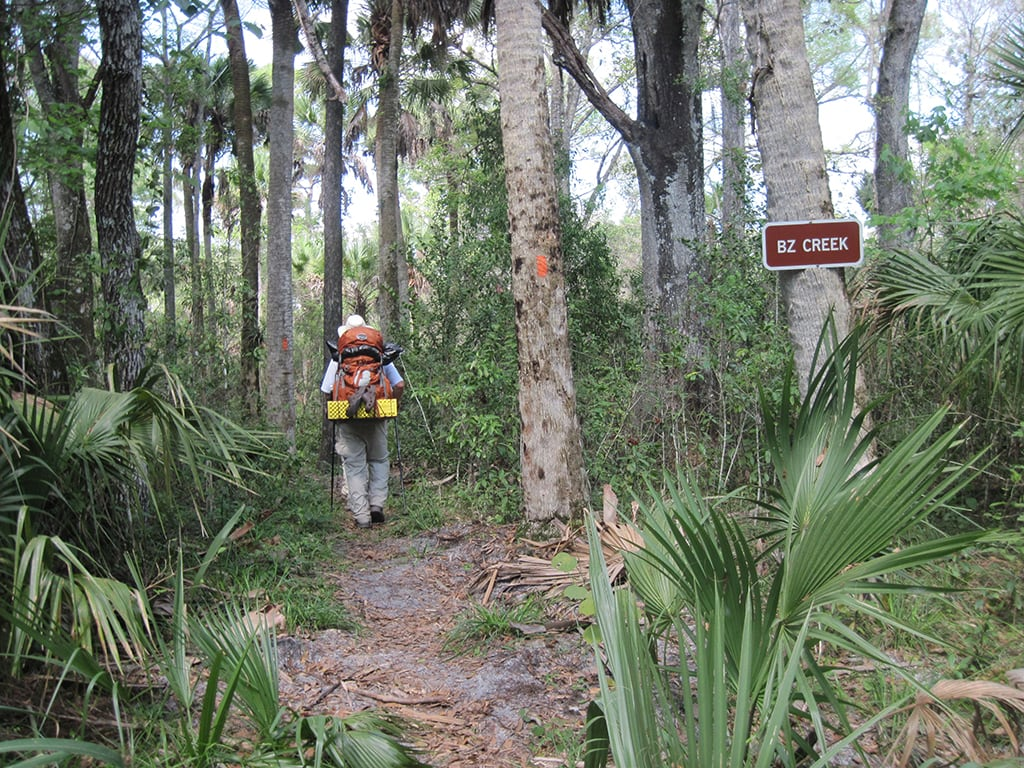 florida trail lucky tract to kitching creek florida hikes