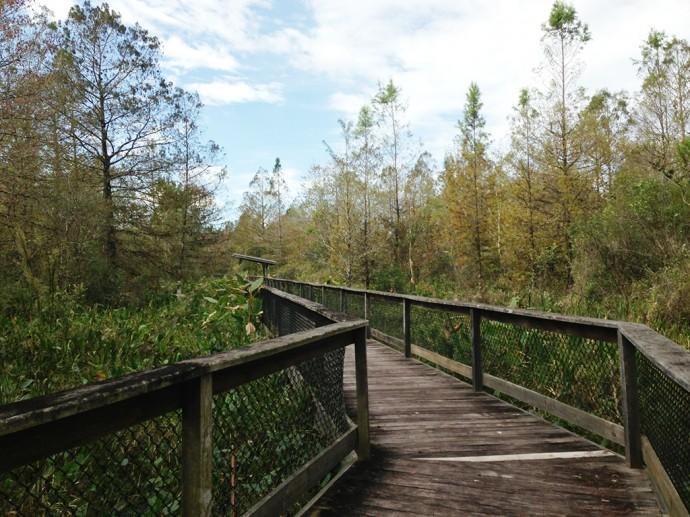 Boardwalk at CREW Bird Rookery Swamp