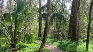 Bivens Arm Nature Park