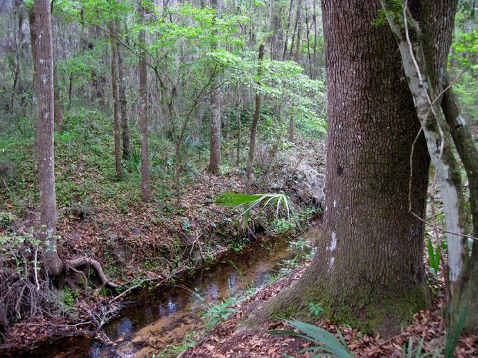 East Tumblin Creek