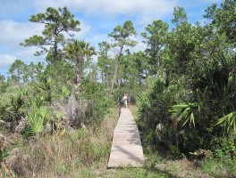 Florida Trail, Corbett WMA to Lucky Tract