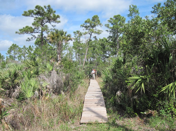 Florida Trail, Corbett WMA to Lucky Tract | Florida Hikes!