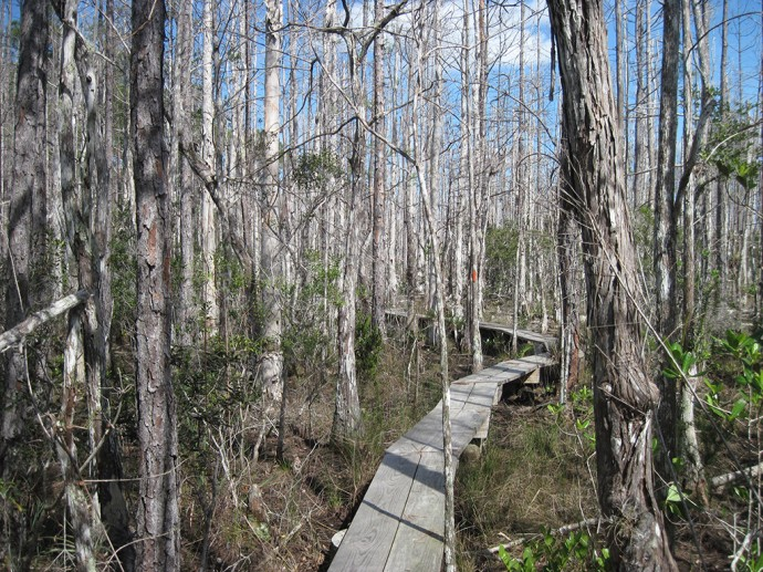 Boardwalks in the Loxahatchee Slough