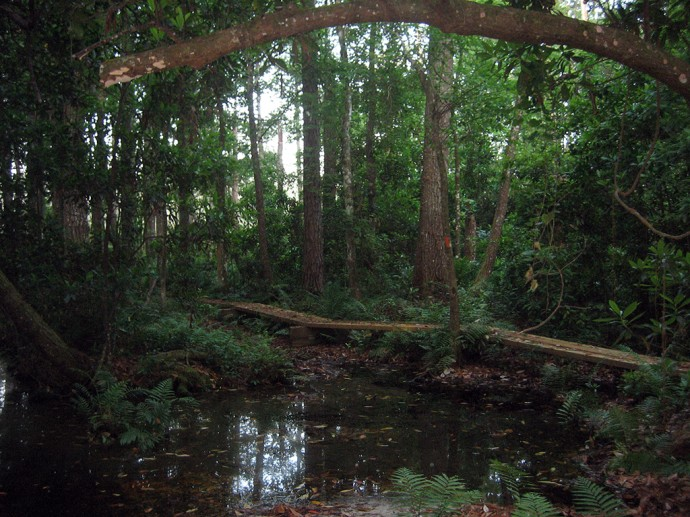 One of the scenic boardwalks on this hike