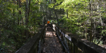 Eaton Creek bridge