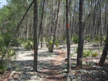 Florida Trail Big Scrub