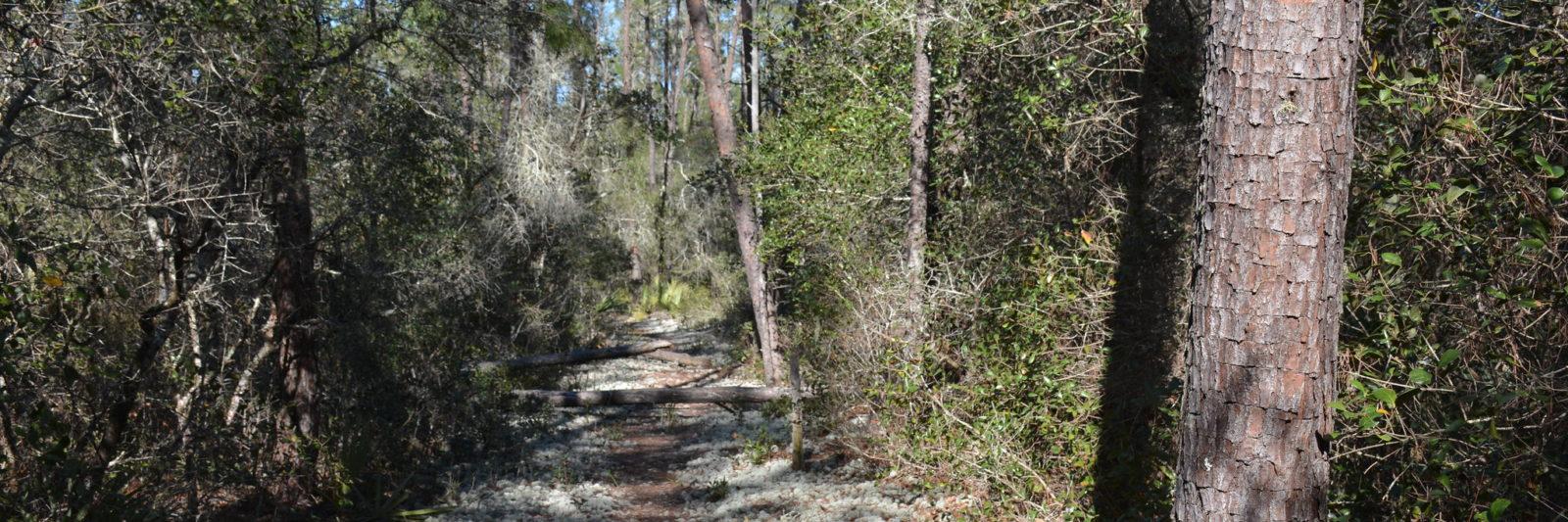 Florida Trail Big scrub