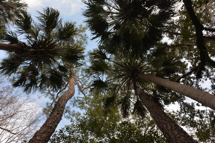 Trees towering overhead in the Young Hammock