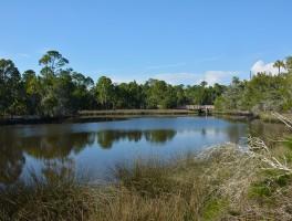 Withlacoochee Gulf Preserve