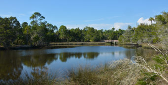 Salt Pond at Withlacoochee Gulf Preserve