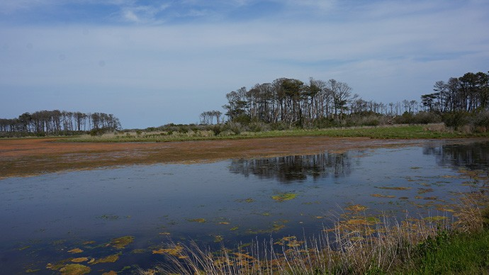 One of the refuge impoundments