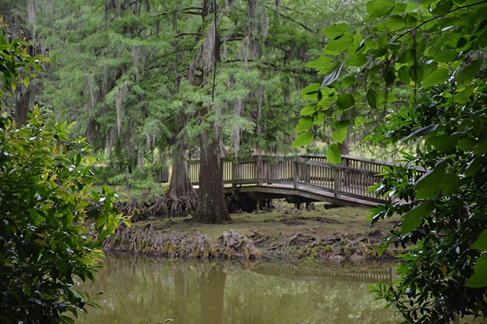 Cypress-lined ponds and bridges