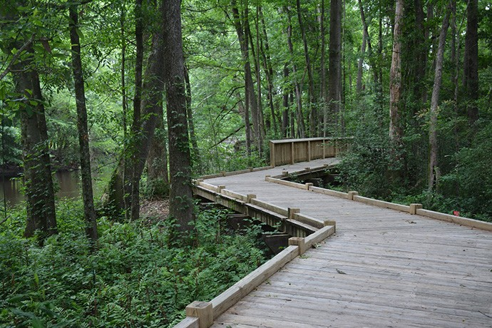 Boardwalk through the floodplain