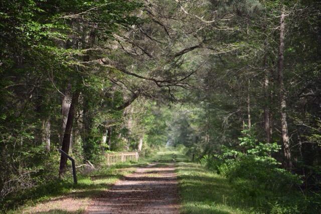 Trail along the Washington Ditch