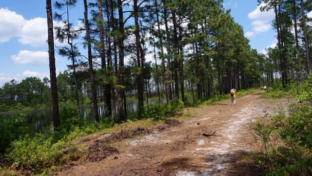 Sandy hikes off into the Green Swamp (John Keatley
