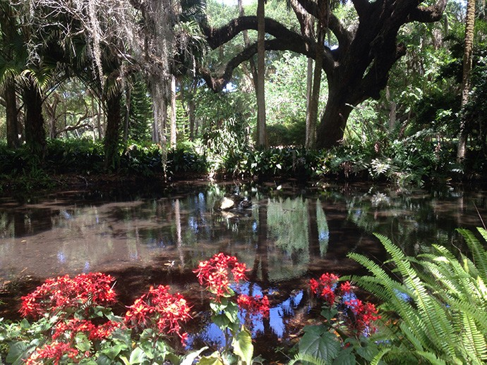 The cultivated beauty of Washington Oaks