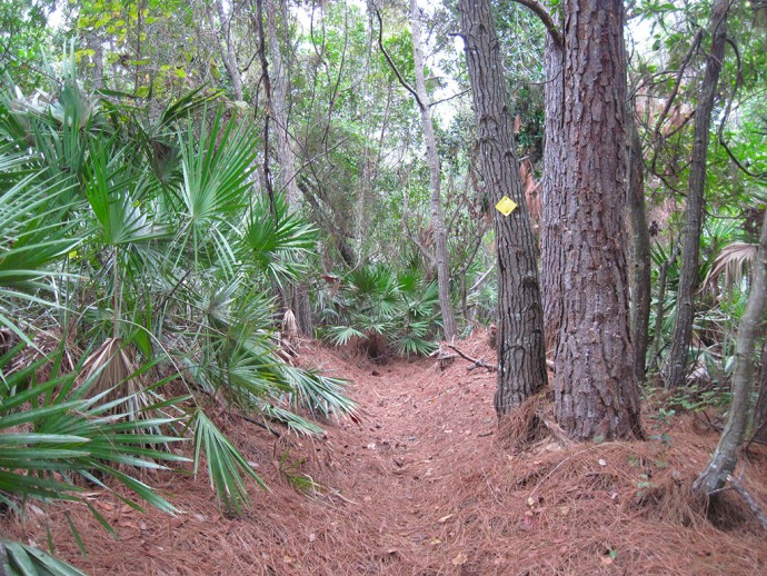 The trail dips into a trough through the woods
