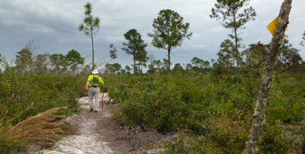 In the open pine flatwoods