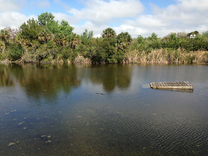 Pond behind the Visitor Center