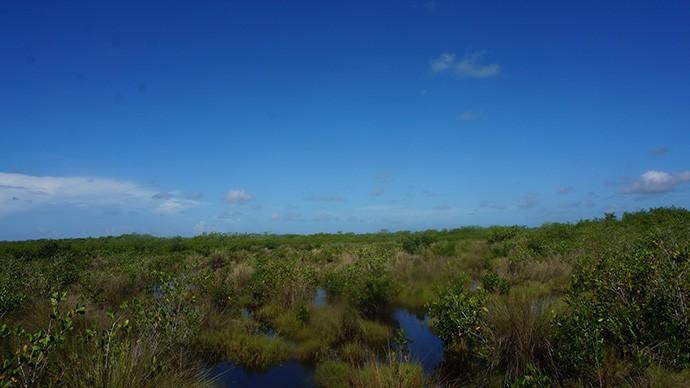 Everglades vista