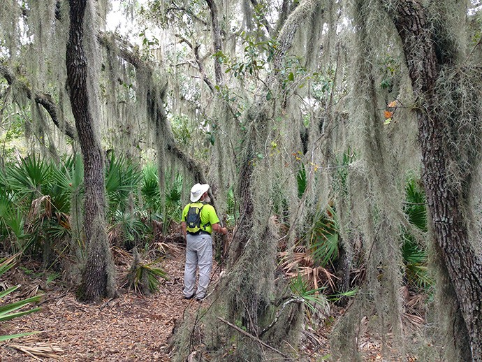 Under the oaks at Moss Point