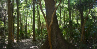 Palm Hammock Trail