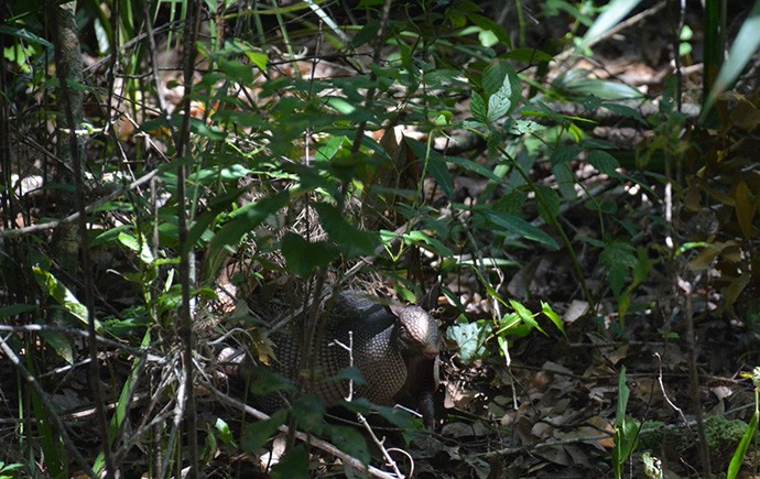 One of many armadillos we saw on our hike