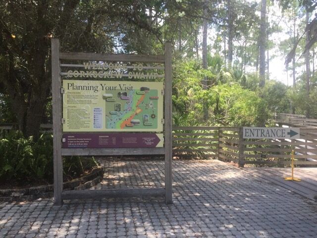 Welcome to Corkscrew Swamp Sanctuary