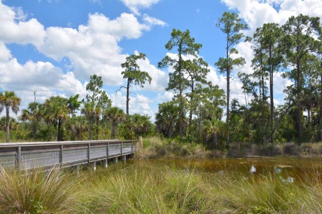 South Wetland Preserve