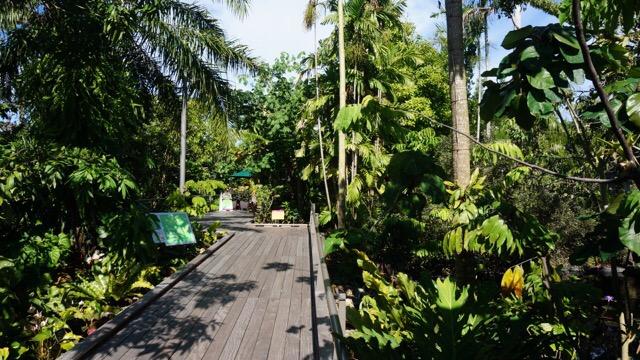 Boardwalks of sustsinable wood