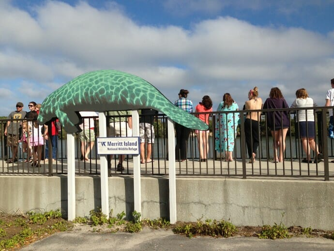 Manatee Viewing Area at Merritt Island NWR