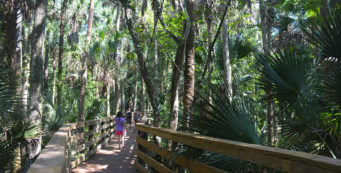 Black Bear boardwalk