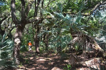 Palm Hammock Trail