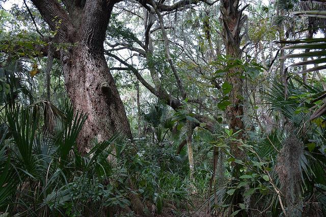 Under the big oak at Wuestoff Park