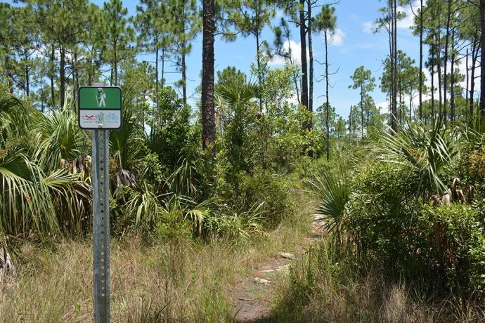 Signage on the pine island