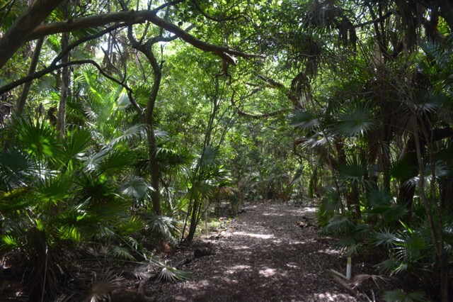 Tropical forest at Key West Botanical Gardens
