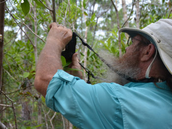 John photographs a liguus tree snail in Everglades National Park
