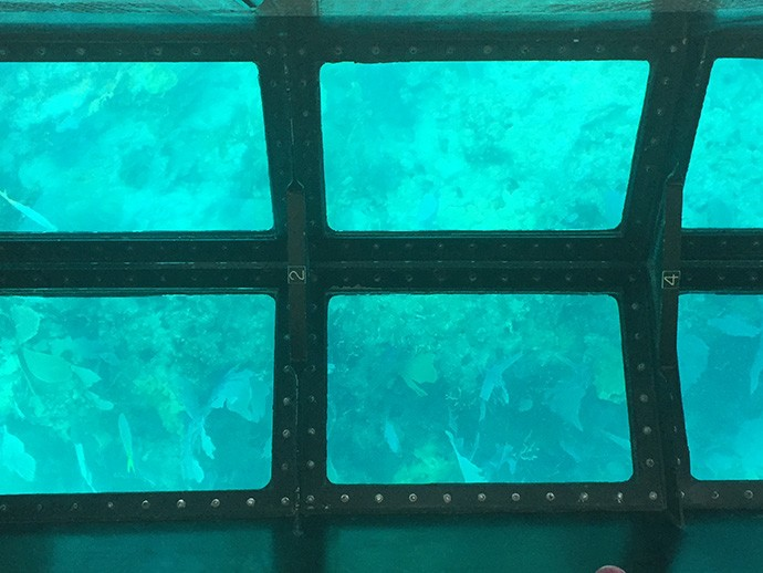 Molasses reef through viewing windows