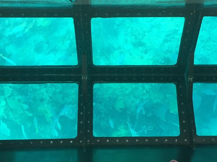 Molasses reef through viewing windows