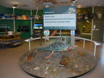 In the Environmental Learning Center at Rookery Bay